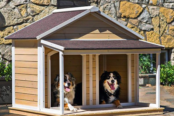 best insulated dog houses